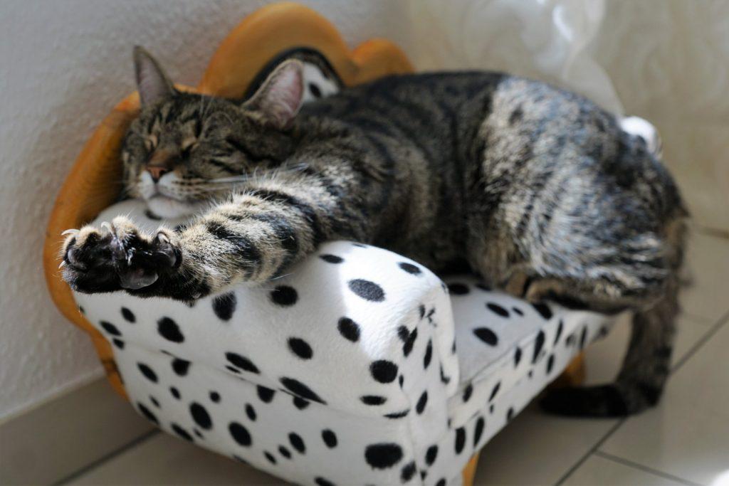 Allison Crescent Vet Cat Boarding