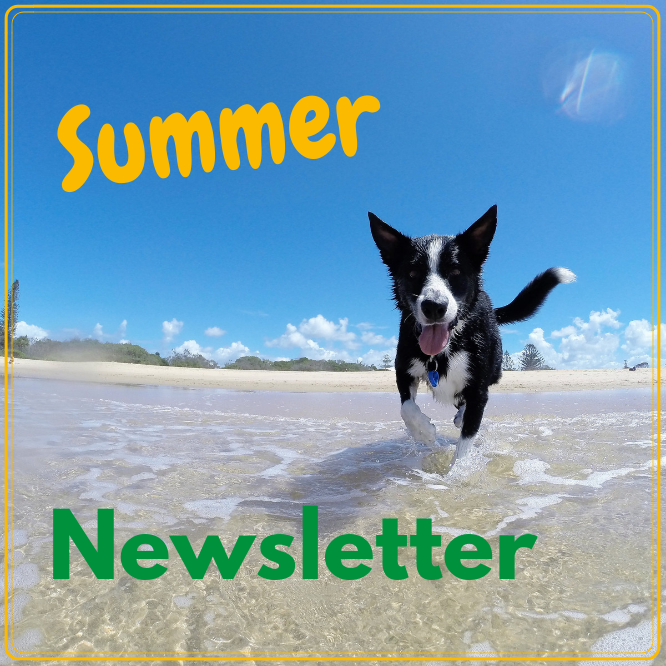 Allison Cres Vet Summer Newsletter