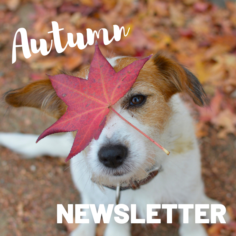 Allison Crescent Vets Autumn Newsletter