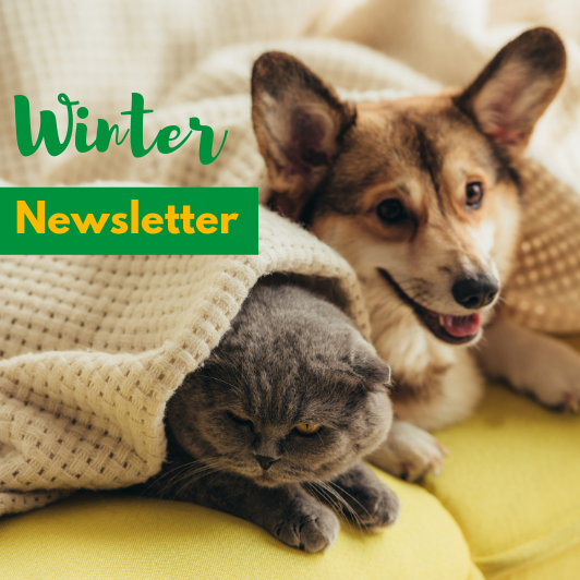 Allison Crescent Vet Winter Newsletter